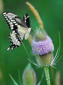 Butterflies, In the family and The family on Pinterest