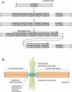 Current genetics - Repetitive DNA
