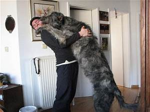 Worlds Biggest DOGS -Guinness Records-Sharable