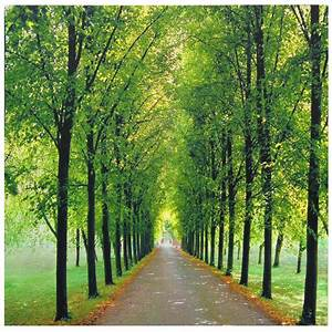 Buy Path Of Life Canvas Wall Art Online  Can