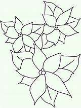 Poinsettia Coloring Outline Drawing Sheet Lineart National Flower Drawings Elegant Netart Paintingvalley Colorluna sketch template