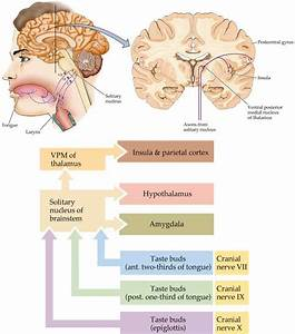 Image Gallery sensory system