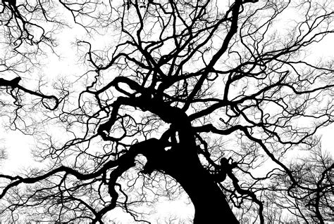 Free Images : nature forest branch silhouette black