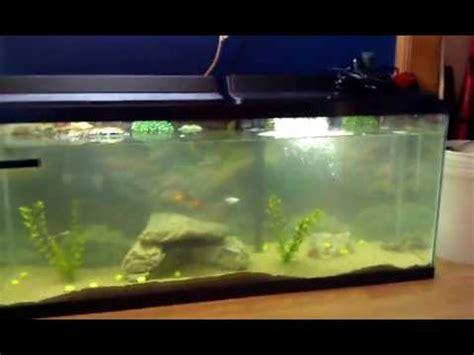 eared slider tank 55 gallon red eared slider turtle tank youtube