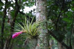 Tillandsia, la pianta che vive sospesa Grow the Planet