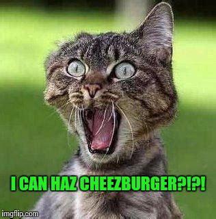 Cheezburger Meme Generator - finally imgflip