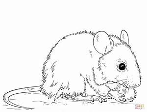 Image Gallery mouse coloring pages