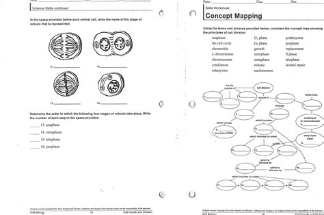 mitosis high school biology worksheets mitosis best free