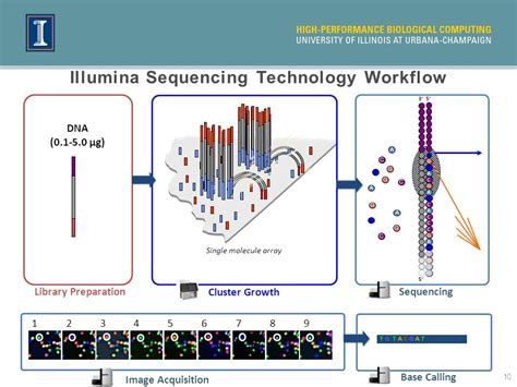 Illumina Sequencing by Rna Seq And Transcriptome Analysis Ppt