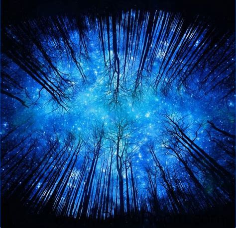 star night forest sky  ceiling wall mural wall paper