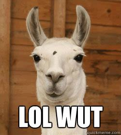 Lol Wut Meme - lol wut lol wut llama quickmeme
