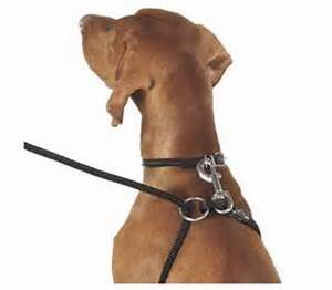 Weiss Walkie Dog Training Leash Dog Harness In One - Safe ...