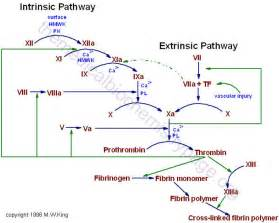 Coagulation cascade Coagulation Factors