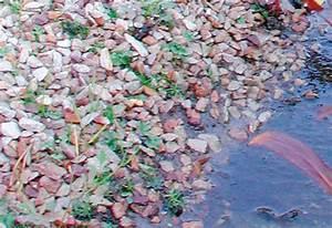 Teichfolie Mit Steinen : risiken beim teich uferbau und der ufergestaltung vermeiden teichuferbau ~ Eleganceandgraceweddings.com Haus und Dekorationen