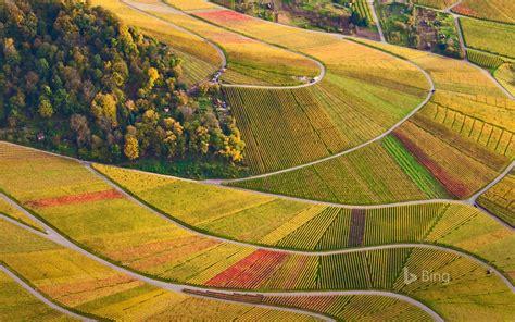 Vineyards at Rotenberg in Baden-Württemberg, Germany ...