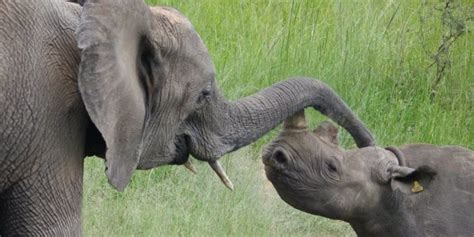 Wildlife Trafficking Syndicate ensnared by United Forces ...