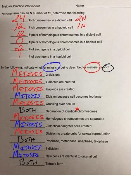 biodub meiosis practice worksheet completed mrdubuque com