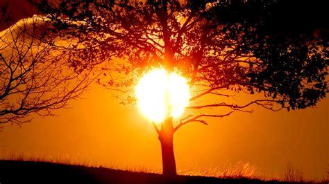 sun sunlight trees nature silhouette golden hour