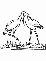 Coloring Stork Couple Pages Supercoloring Realistic Printable Bird Colouring Baby Animal Coloringtop Categories sketch template