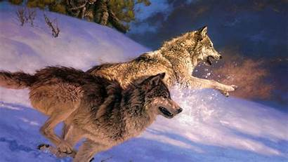 Wolf Wallpapers Attack Move Snow Couple Animals
