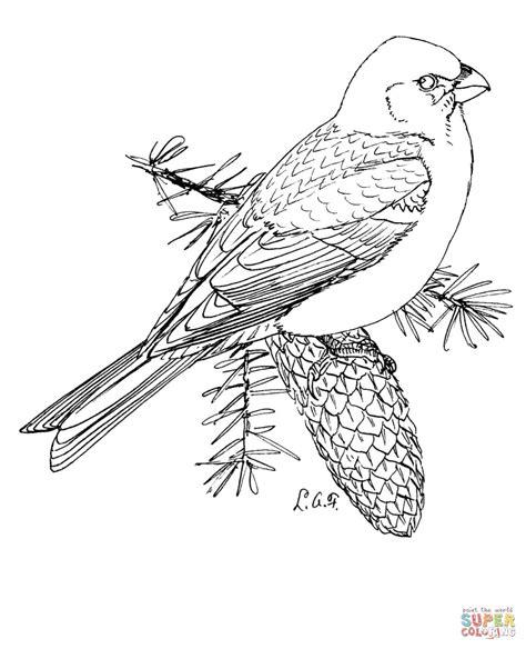 pine grosbeak coloring page  printable coloring pages
