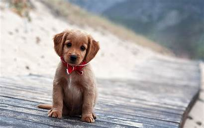 Puppy Dogs Animals Wallpapers Puppies Dog Cutest