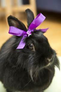 Purple Bunny with Bow