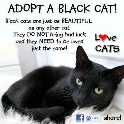adopt cat adopt a black cat wind drinker