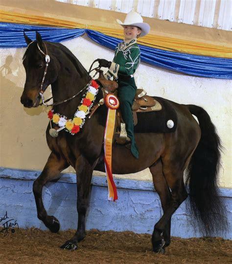 morgan horse abel marvellous karen courtesy western