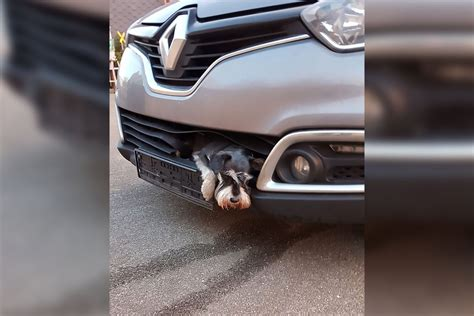 Dog Survives After Getting Stuck In Grille Of Car