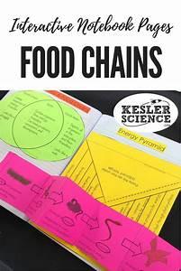Best 25  Food Chains Ideas On Pinterest