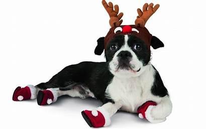 Christmas Dog Funny Rudolf Dogs Reindeer Animals