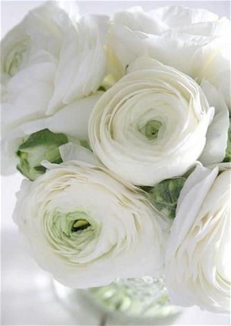 cuisine legere et dietetique 1000 idées sur le thème roses sur roses roses fleurs et arbustes