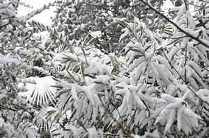 Oleander Im Winter : tips on winterizing oleander plants learn about the care of oleanders in winter ~ Orissabook.com Haus und Dekorationen