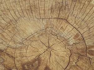 Cut Wood Texture Free Stock Photo