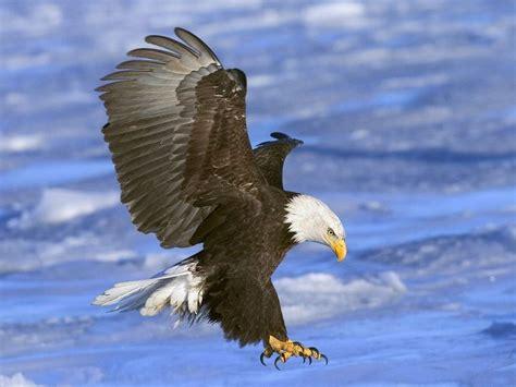 birds  prey  screensaver