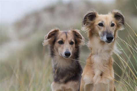 hunde begleiten leben ravensburg dayliliescom