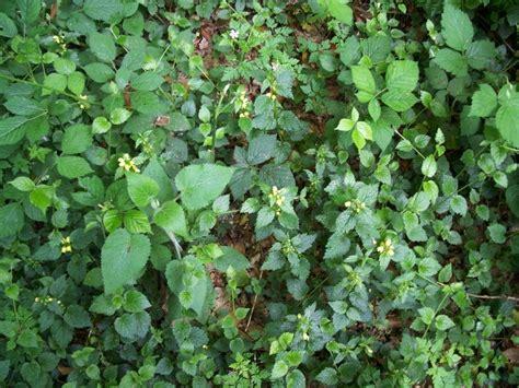 comment arracher les mauvaises herbes comment arracher les mauvaises herbes 28 images enlever les mauvaises herbes sans malmener