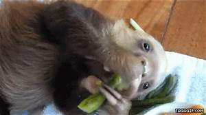 Eating-Sloth GIFs - Find & Share on GIPHY