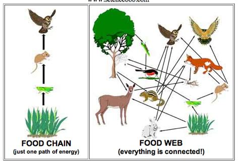 cuisine chagne energy flow food chains and food webs science 6 at fms