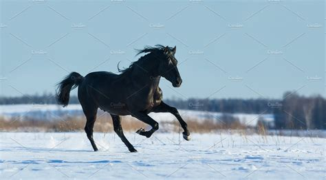 horse running fast gallops horses stallion pure snow animals animal creative similar