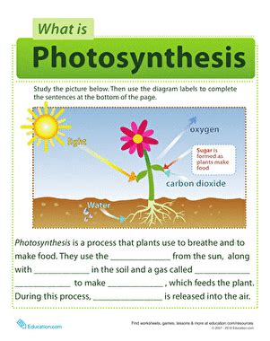 photosynthesis for kids worksheet education com