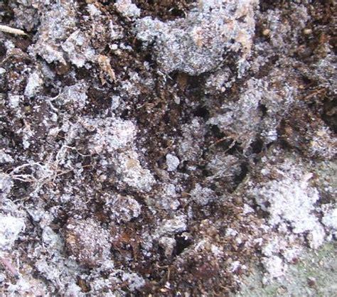 insekten in blumenerde hilfe meine erde im blumenbeet sieht ganz grau aus mein sch 246 ner garten forum