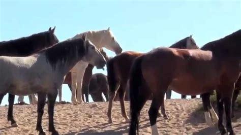 peaceful horses