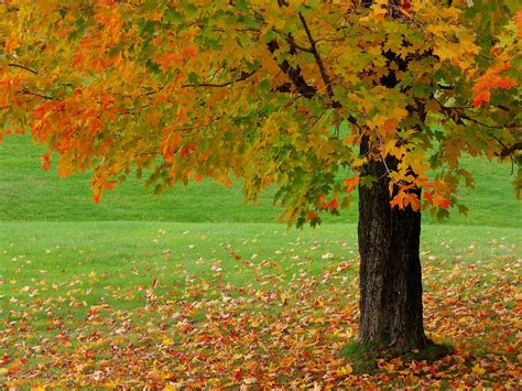 Autumn Images Beautiful Autumn Season Wallpapers Hd Wallpapers