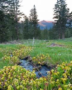 California Native Plant Society  Cnps