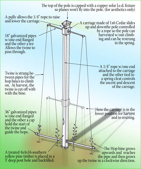 Hops Trellis Design by How To Grow Hops A Hop Growing Journal And How To Guide
