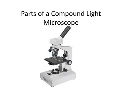 light microscope definition ppt parts of a compound light microscope powerpoint