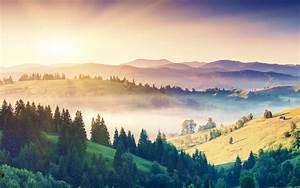 Mist, Trees, Forest, Sunrise, Mountain, Landscape