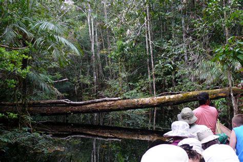 amazon rainforest  featuring manaus anavilhanas jau